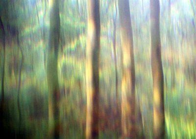 Fotogalerie Naturansichten